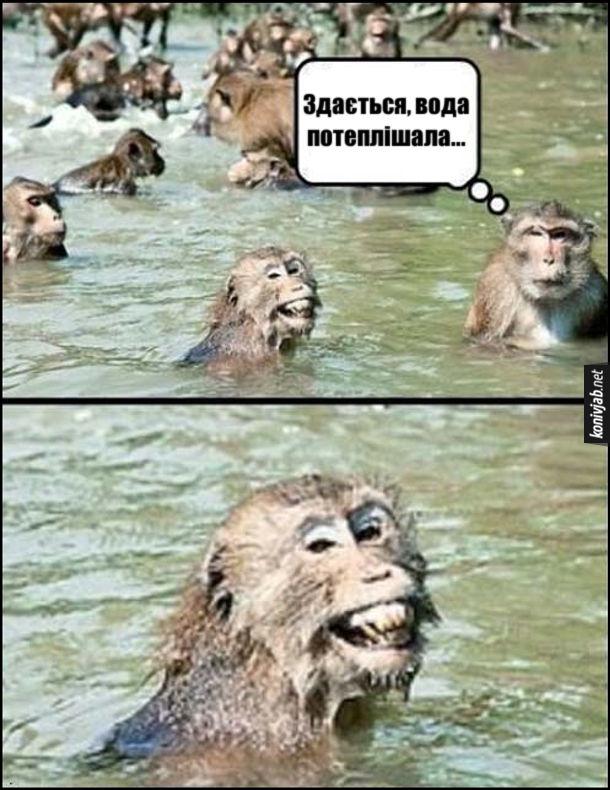 Прикол про мавп. Мавпи купаються в річці. Одна з мавп: - Здається, вода потеплішала... Поряд стоїть мавпа і з виразу обличчя схоже, що вона надзюрила у воду