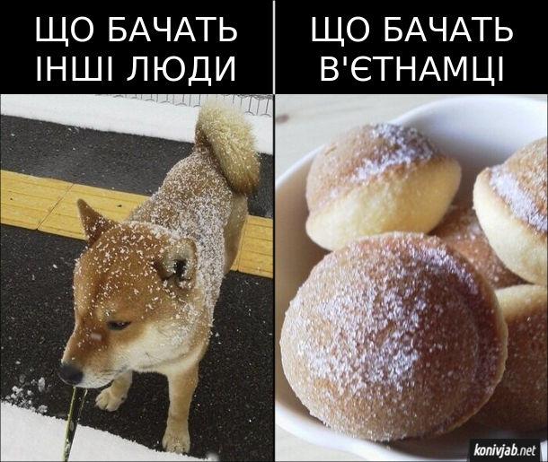 Мем про в'єтнамську кухню. Що бачать інші люди: песик притрушений снігом. Що бачать в'єтнамці: пончики притрушені цукром
