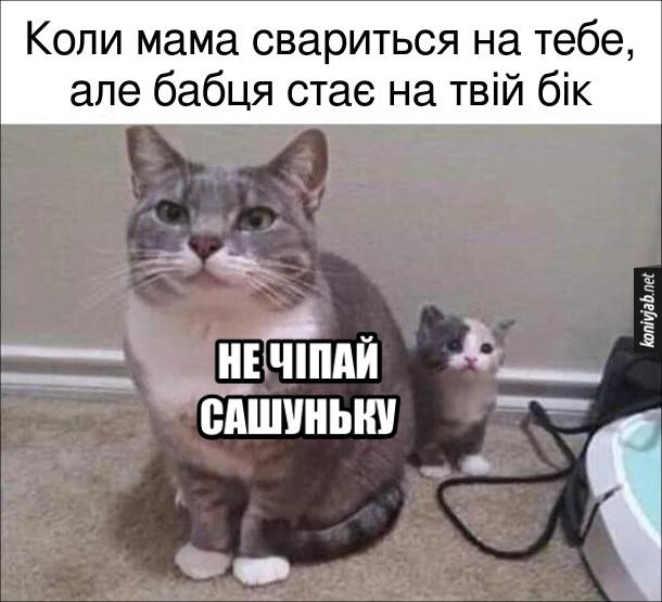 """Мем Бабця заступилася. Коли мама свариться на тебе, але бабця стає на твій бік. """"Не чіпай Сашуньку!"""" Мем з кицькою, за якою сидить маленьке кошеня"""