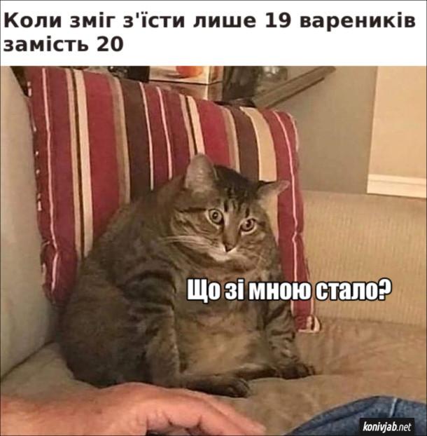 Мем про вареники. Коли зміг з'їсти лише 19 вареників замість 20. Гладкий кіт задумливо: - Що зі мною стало?