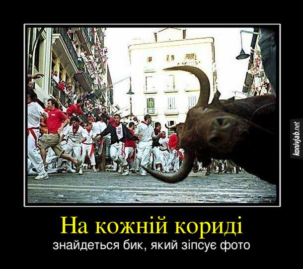 Демотиватор Корида. На кожній кориді знайдеться бик, який зіпсує фото