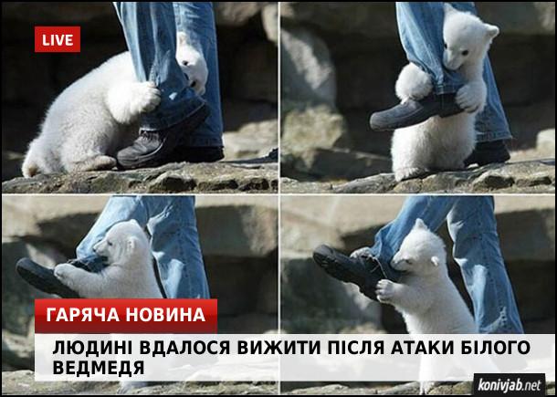 Жарт про біле ведмежа. Гаряча новина: людині вдалося вижити після атаки білого ведмедя. На фото: маленьке біле ведмежа грається з чоловіком