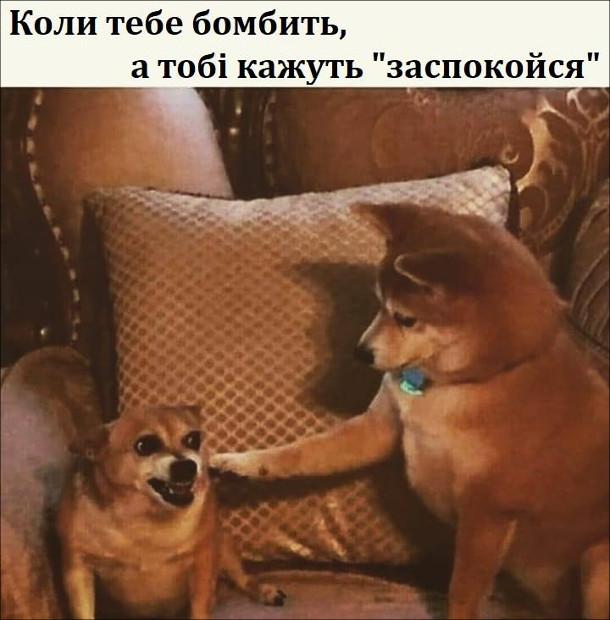 """Мем Двоє собак, один люто вишкірився, а інший поклав лапу йому на спину. Коли тебе бомбить, а тобі кажуть """"заспокойся"""""""