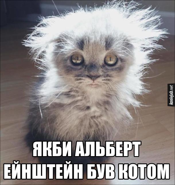 Прикол Кіт схожий на Ейнштейна. Якби Альберт Ейнштейн був котом