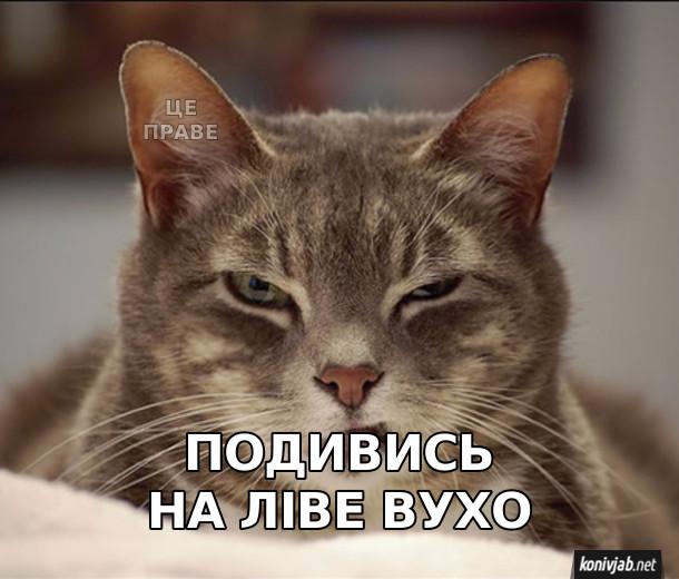 Жарт з котом. Подивись на ліве вухо. На вусі: Це праве