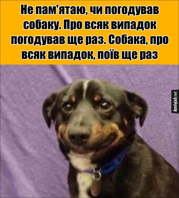 Анекдот про годування собаки. Не пам'ятаю, чи погодував собаку. Про всяк випадок погодував ще раз. Собака, про всяк випадок, поїв ще раз