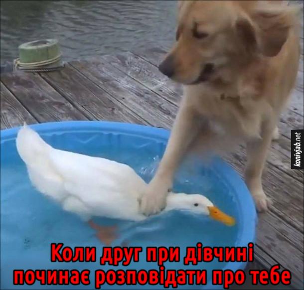 Прикол Собака і качка. Пес тримає голову качки під водою. Коли друг при дівчині починає розповідати про тебе