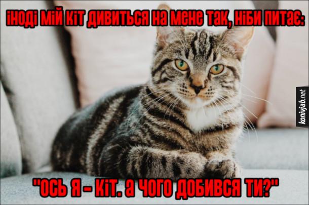 """Прикол Кіт дивиться. Іноді мій кіт дивиться на мене так, ніби питає: """"Ось я - кіт. А чого добився ти?"""""""