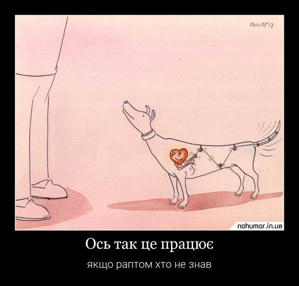 Смішний малюнок Чому собака махає хвостом.