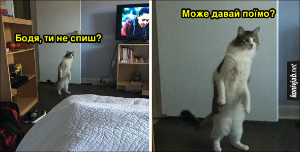 Мем Кіт на задніх лапах заглядає в ліжко: - Бодя, ти не спиш? Може давай поїмо?