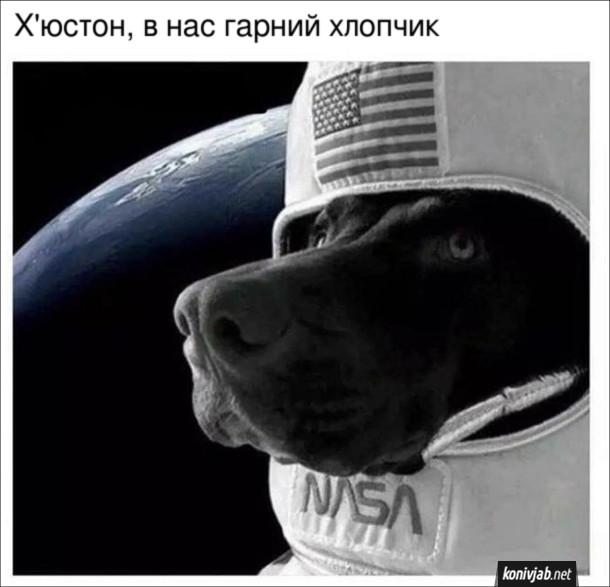Мем Пес астронавт. Х'юстон, в нас гарний хлопчик