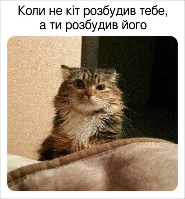 Мем Розбудив кота. Коли не кіт розбудив тебе, а ти розбудив його