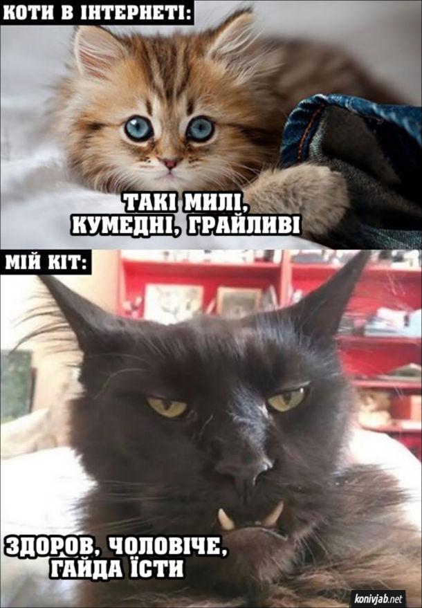 Прикол Страшний кіт. Коти в інтернеті: Такі милі, кумедні, грайливі. Мій кіт: - Здоров, чоловіче, гайда їсти