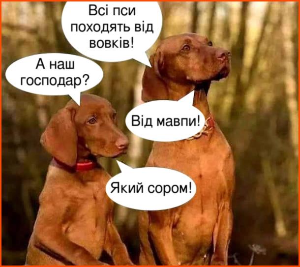 Смішна розмова собак. Двоє собак спілкуються. - Всі пси походять від вовків! - А наш господар? - Від мавпи! - Який сором!
