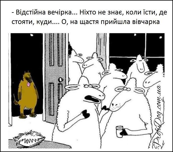 Прикол Вівці і вівчарка. Вечірка у вівців. - Відстійна вечірка... Ніхто не знає, коли їсти, де стояти... О, на щастя прийшла вівчарка