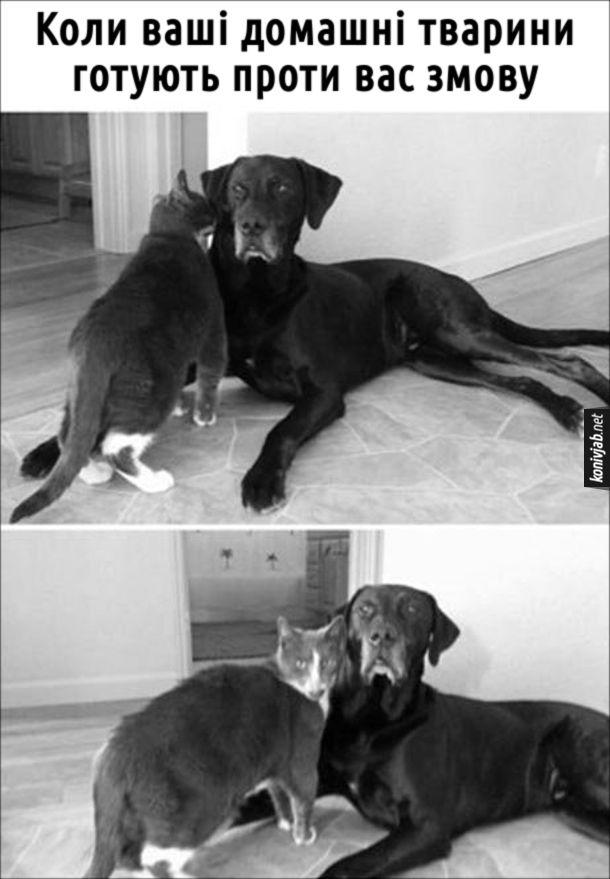Прикол Собака і кіт ніби перешіптуються. Коли ваші домашні тварини готують проти вас змову