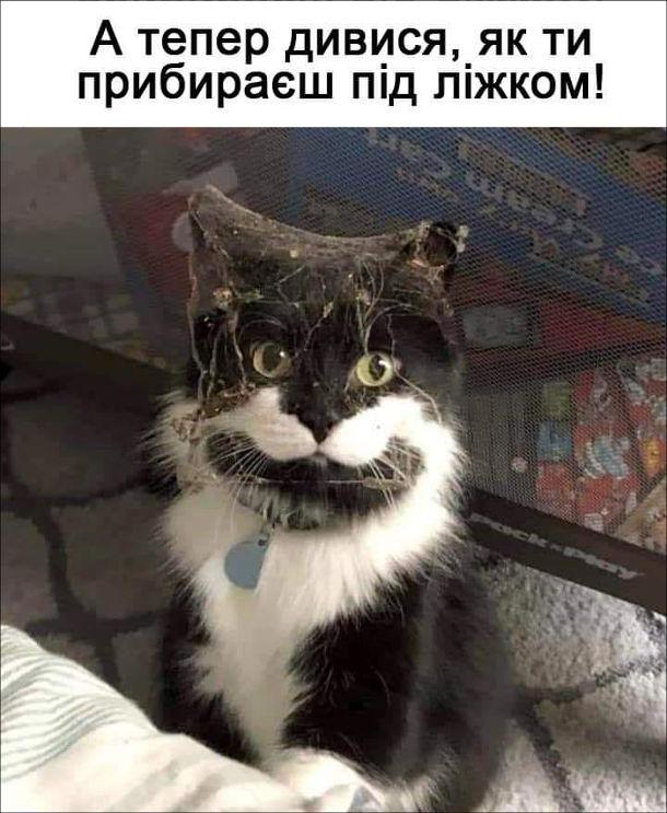 Мем Кіт забруднився під ліжком. А тепер дивися, як ти прибираєш під ліжком!