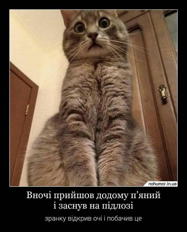 Прикол Кіт і п'яний господар. Вночі прийшов додому п'яний і заснув на підлозі. Зранку відкрив очі і побачив це: кіт сидить і здивовано дивиться