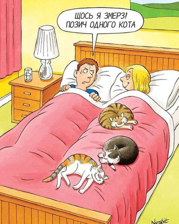 Смішний малюнок Коти сплять в ліжку, лежачи на господині. Господар: - Щось я змерз! позич одного кота.