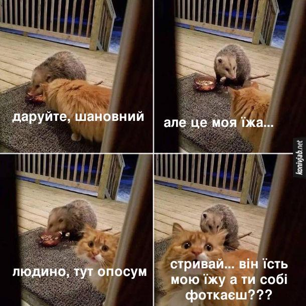 Прикол Кіт і опосум. Опосум їсть з котячої миски. Підходить кіт: - Даруйте, шановний, але це моя їжа... Людино, тут опосум. Стривай... він їсть мою їжу, а ти собі фоткаєш???