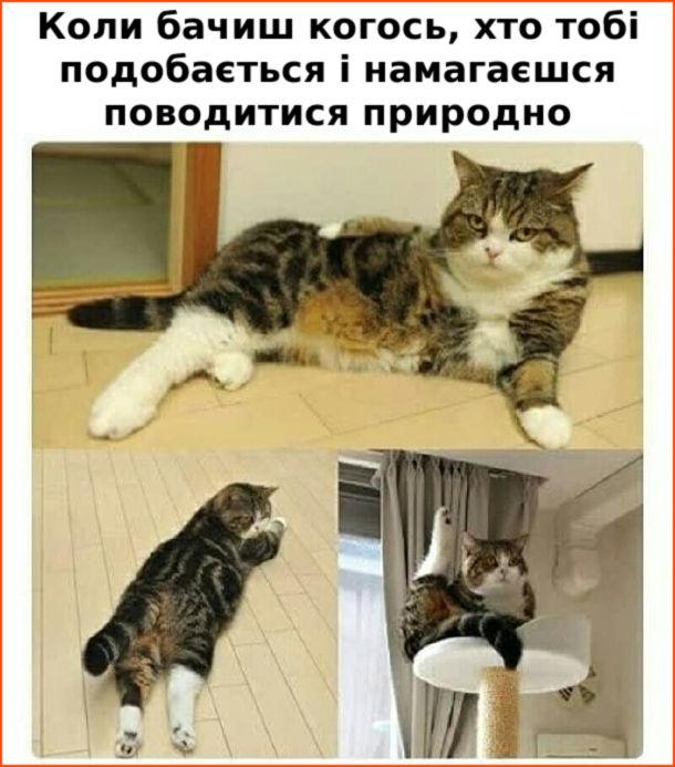Кіт в смішних позах. Коли бачиш когось, хто тобі подобається і намагаєшся поводитися природно