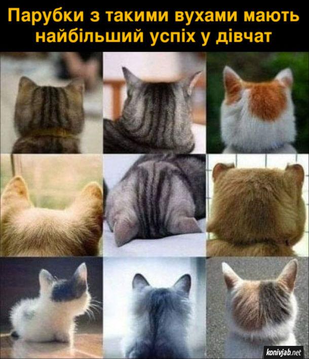 Жарт про котячі вушка. Парубки з такими вухами мають найбільший успіх у дівчат