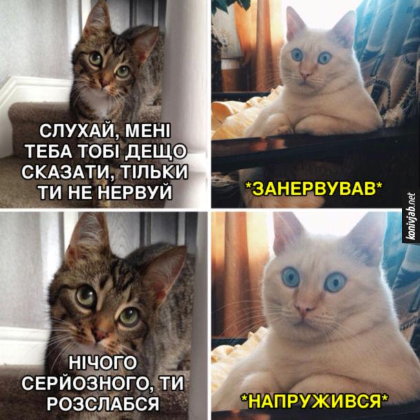 Смішні картинки Два коти. - Слухай, мені треба тобі дещо сказати, тільки ти не нервуй. (Занервував). Нічого серйозного, ти розслабся. (Напружився)