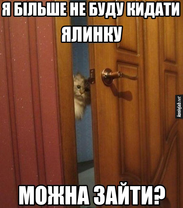 Прикол Кіт нашкодив. Кіт заглядає в двері: - Я більше не буду кидати ялинку. Можна зайти?