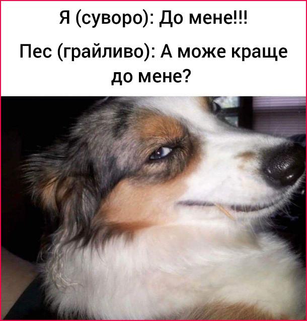 Мем про пса. Я (суворо): До мене!!! Пес (грайливо): А може краще до мене?