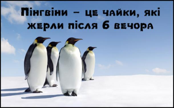 Анекдот про пінгвінів. Пінгвіни - це чайки, які жерли після 6 вечора