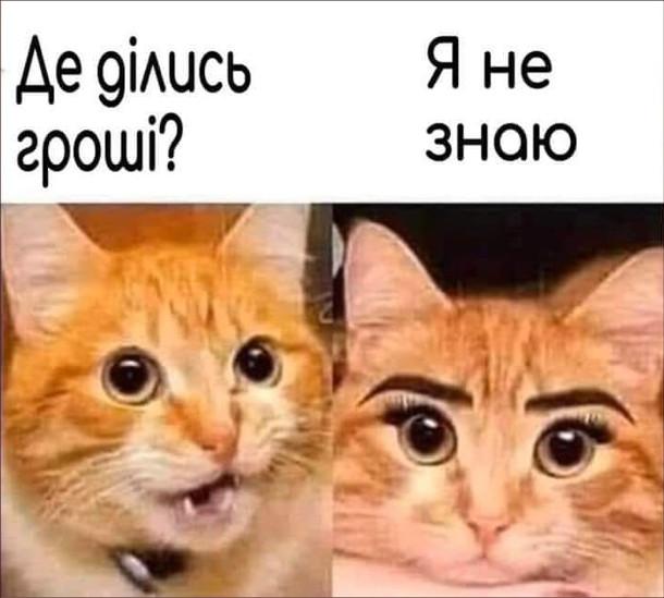 Мем Гроші на мейкап. Кіт: - Де ділись гроші? Кішка, з мейкапом на обличчі: - Я не знаю
