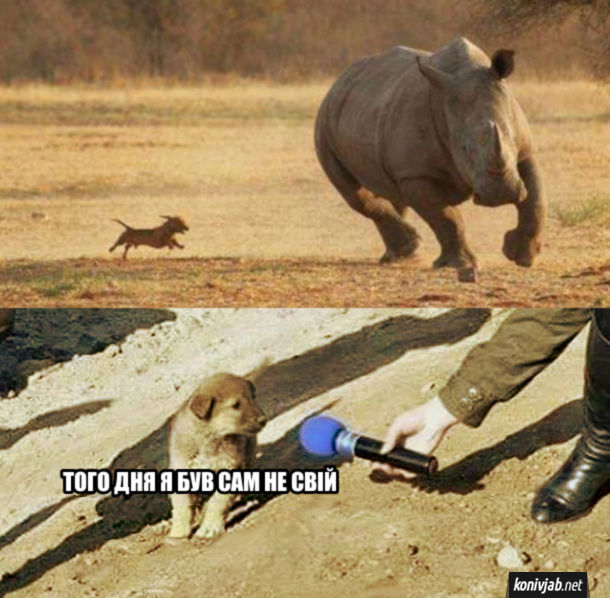 Мем Пес і носоріг. Песик бігає за носорогом. Потім дає інтерв'ю: - Того дня я був сам не свій.