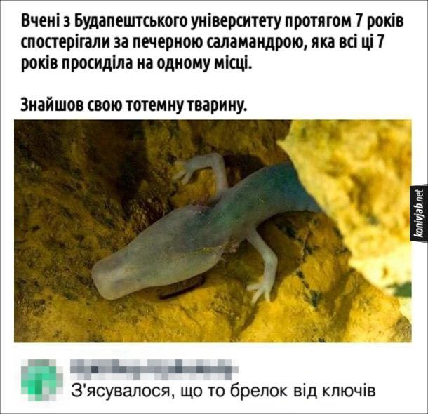 Жарт про саламандру. Пост в соцмережі: Вчені з Будапештського університету протягом 7 років спостерігали за печерною саламандрою, яка всі ці 7 років просиділа на одному місці. Знайшов свою тотемну тварину. Коментар: З'ясувалося, що то брелок від ключів