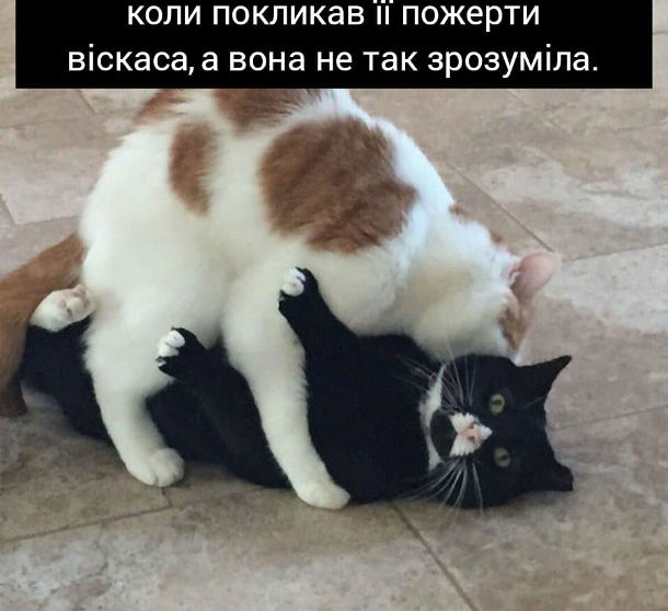 Смішна фотка кіт і кицька. Коли покликав її пожерти віскаса, а вона не так зрозуміла і лізе обійматися