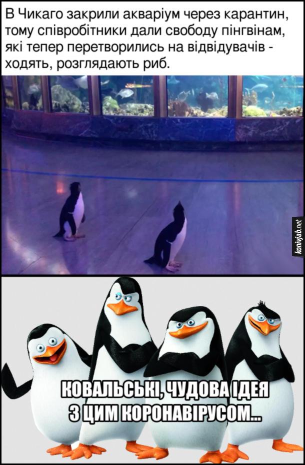 Прикол Карантин в зоопарку Чикаго. В Чикаго закрили акваріум через карантин, тому співробітники дали свободу пінгвінам, які тепер перетворились на відвідувачів - ходять, розглядають риб. Шкіпер: Ковальскі, чудова ідея з цим коронавірусом...