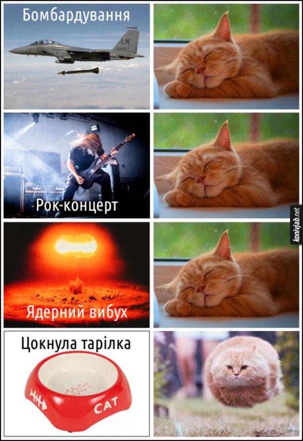 Мем Кіт спить. Бомбардування, рок-концерт, ядерний вибух - кіт спить. Цокнула тарілка - кіт біжить