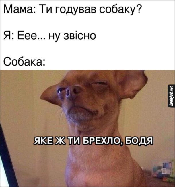 Мем Не погодував собаку. Мама: Ти годував собаку? Я: Еее... ну звісно. Собака: Яке ж ти брехло, Бодя