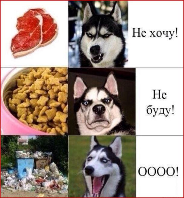 """Прикол Собака і іжа з смітника. Пропонуєш собаці м'ясо, собака: """"Не хочу!"""". Даєш собаці корм, собака """"Не буду!"""" А от коли собака бачить смітник, """"Оооо! Це справжня їжа!"""""""