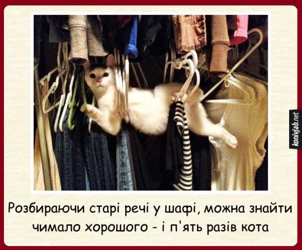 Прикол кіт у шафі. Розбираючи старі речі у шафі, можна знайти чимало хорошого - і п'ять разів кота