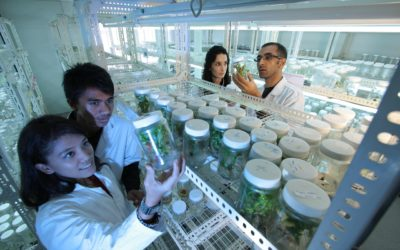 The importance of laboratory teams