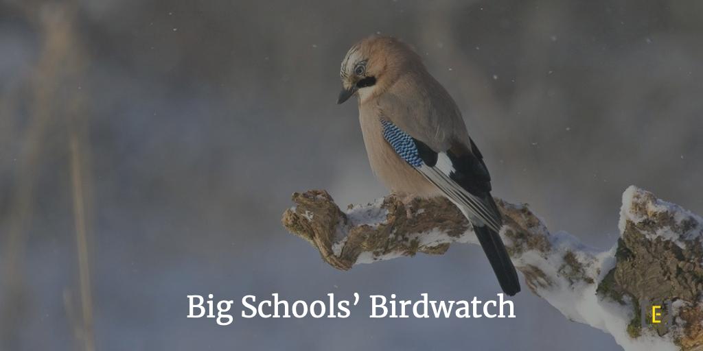 Big Schools' Bird Watch