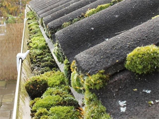 Moss-in-Gutter-min