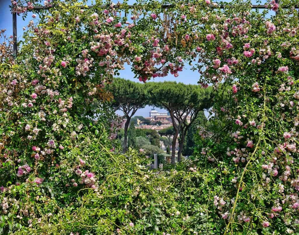 Roses in the Rome garden in the shape of heart