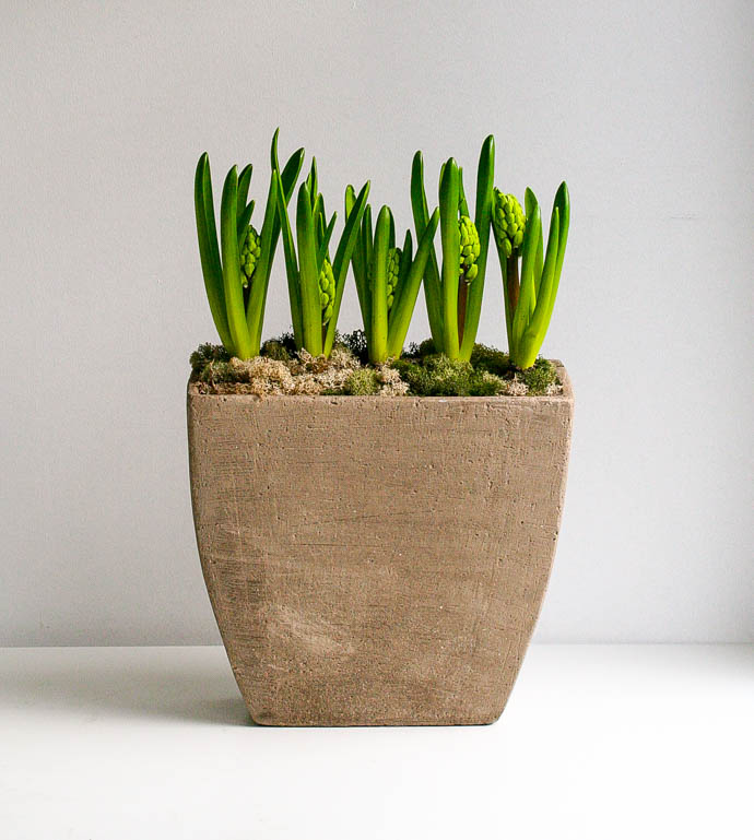 Rough cement planter with spring bulbs, contract flowers by Garland