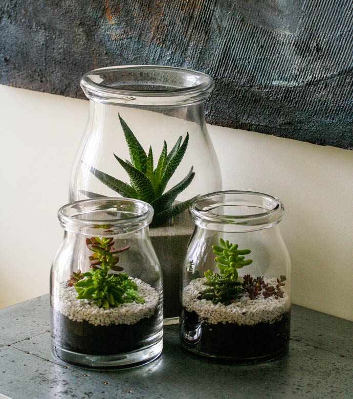 Succulent Terrariums, perfect gifts, created by Garland