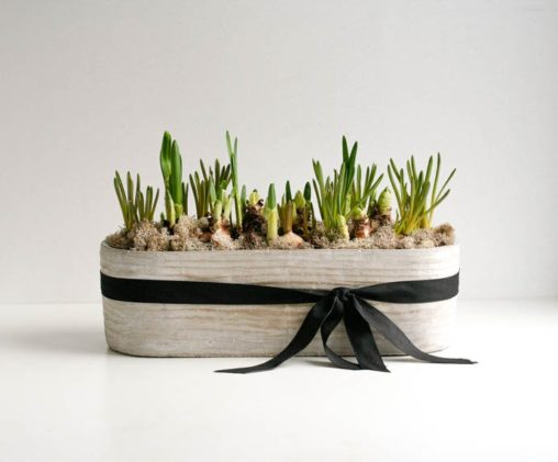 Cement planter filled with paperwhite and bluebell bulbs, a gorgeous gift, created by Garland, London florist