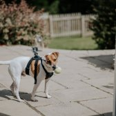 dog-with-go-pro-marshall_0