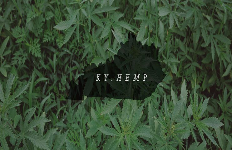 kentucky-hemp-header.jpg