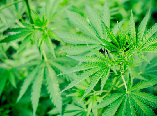 Ireland's Legalisation Of Cannabis And Potential Concern