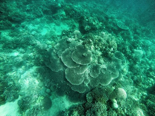snorkeling masasa beach